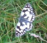 DM9 nature conservation butterfly